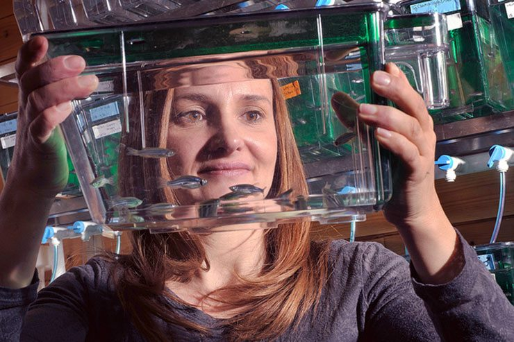 Sandra Rieger PhD uses zebrafish to develop new neuropathy treatments
