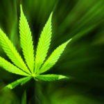 Medical Cannabis for Neuropathic Pain